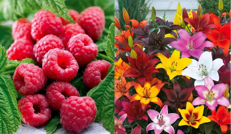 Fruitiers et fleurs chez Willemse
