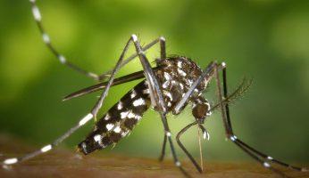 Invasion moustique tigre en France